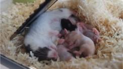 hamster-nest Welkom