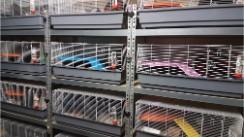 hamsterkooien Welkom