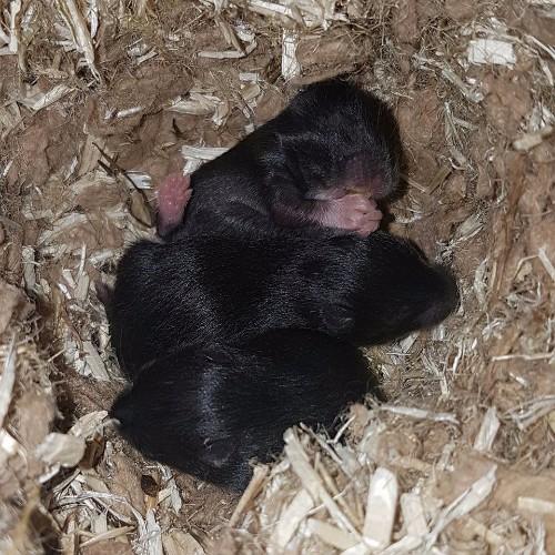 hamsters-nest-a1-3 Nestjes