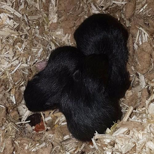 hamsters-nest-a1-4 Nestjes