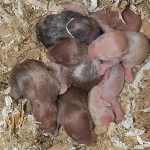 hamsters-nest-c1-4 Nestjes