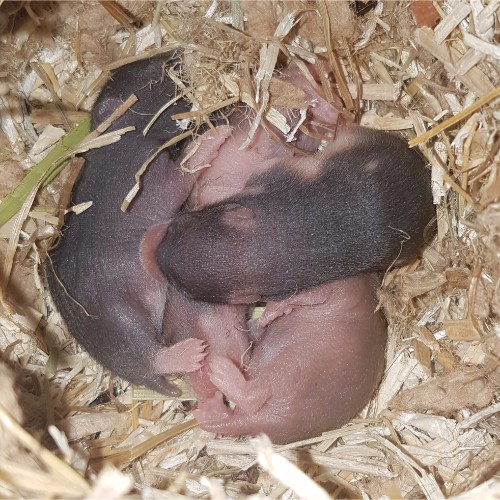 hamsters-nest-d1-3 Nestjes