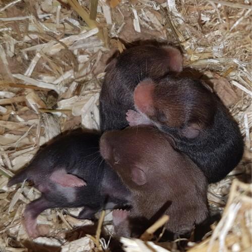 hamsters-nest-d1-6 Nestjes