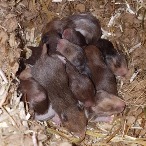 hamsters-nest-e1-4 Nestjes