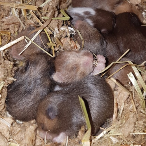 hamsters-nest-e1-5 Nestjes