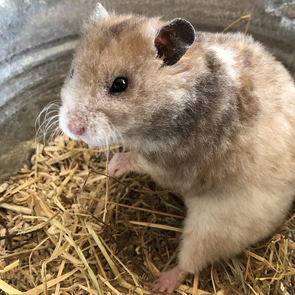 hamsterywolvega-bewoners-gijs-1-600x600 Nestjes