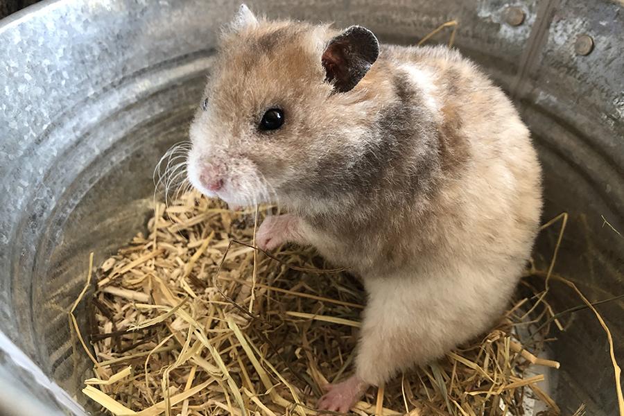 hamsterywolvega-bewoners-gijs-1 Bewoners